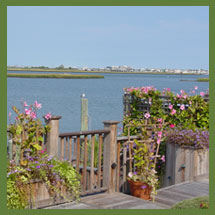 Bayside Container Gardens