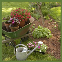 We Plan, You Plant